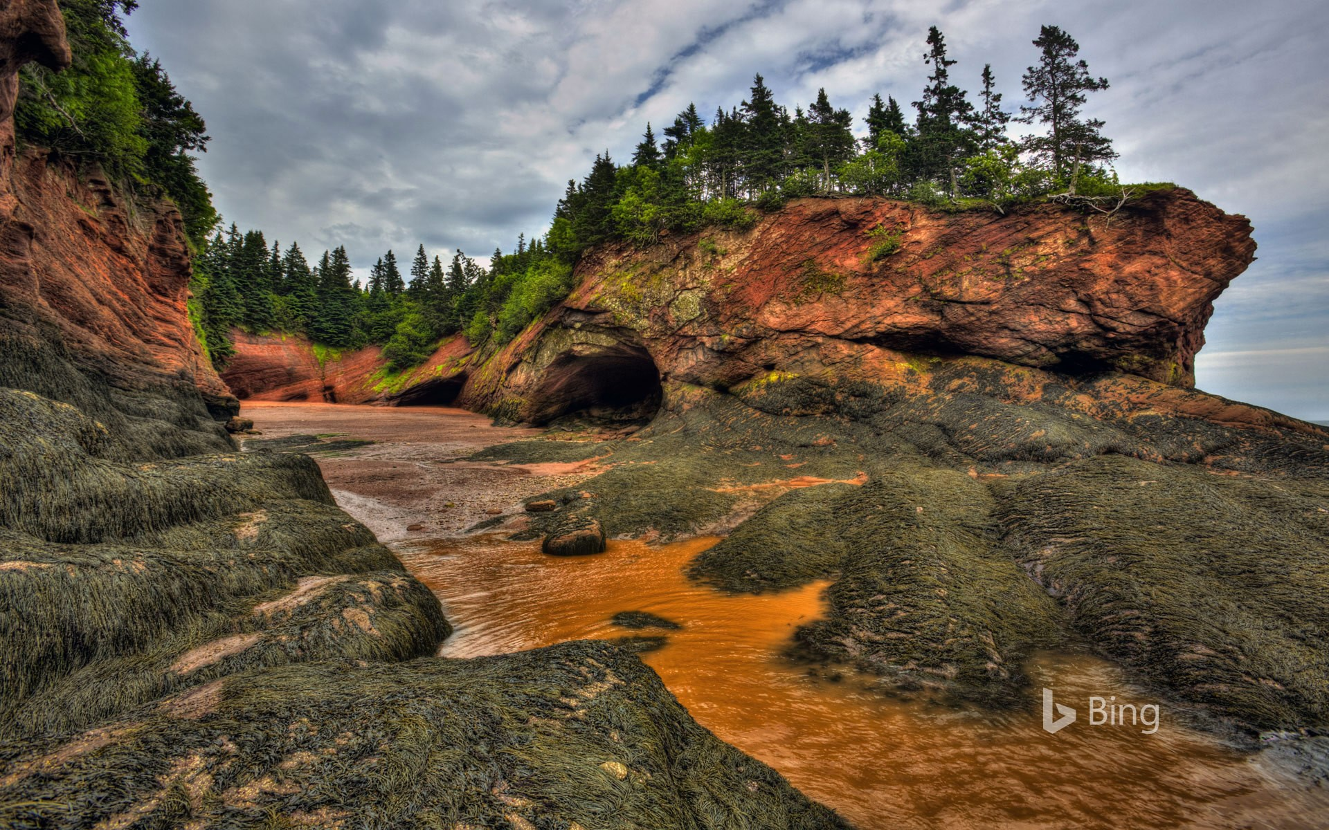 Acadian day in Canada : bay of fundy