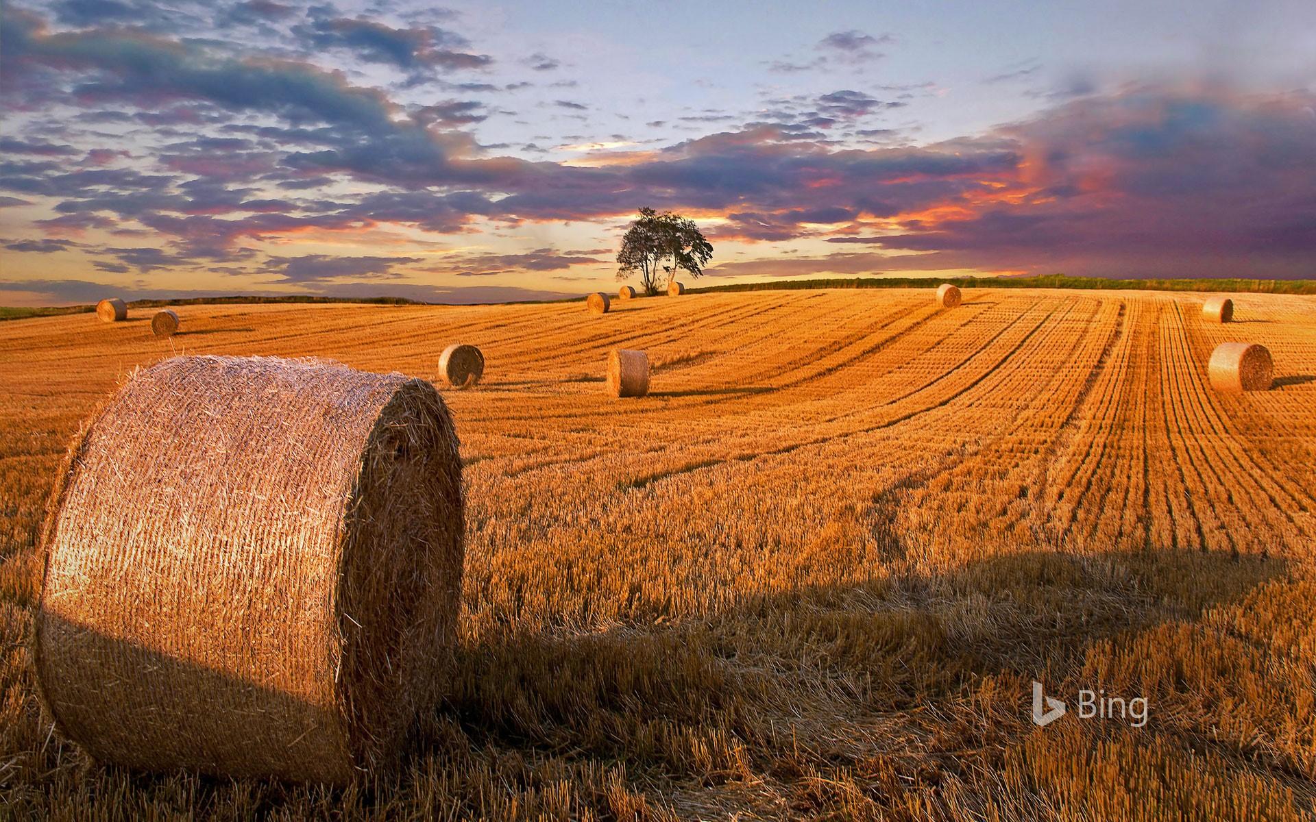 hay (grass)