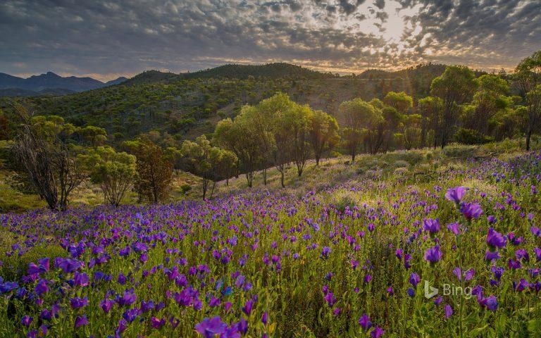 Ikara-Flinders Ranges National Park Springing back to it